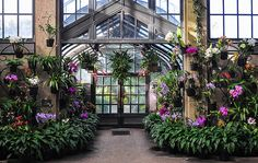 The Orchid Room at Longwood Gardens | December 1, 2013 | school40 | Flickr