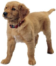 Read this article for the housetraining checklist for puppies.