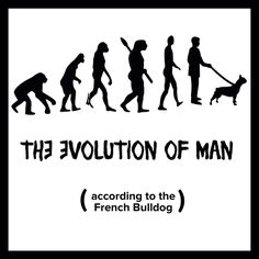 'The Evolution of Man', (according to the French Bulldog), sadly, my frenchie has confirmed this theory