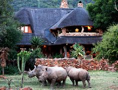Ant's Nest lodge in South Africa Africa Art, Out Of Africa, Places To Travel, Places To Go, South Afrika, Safari Holidays, Game Lodge, African Safari, Beautiful Places To Visit