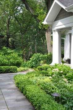 Dwarf English Boxwood Design Ideas, Pictures, Remodel, and Decor - page 12