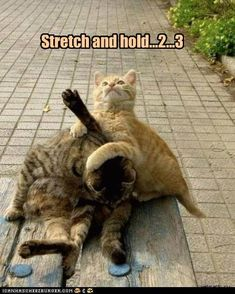 Physical Therapy Kitty Repinned by  SOS Inc. Resources  http://pinterest.com/sostherapy.