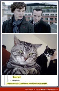 Sherlock kitties - THIS IS FOR YOU, EMMA!!!!!!!!!!!!!!!!!!!!!!!!!!!!!!!!!!!!!!!!!!!!!!!!!!