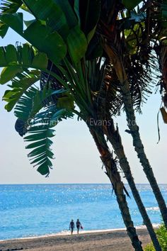 Palm Trees Torrox Costa del Sol Axarquia Spain photograph picture poster print #torrox #costadelsol #art #photography