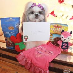 So last night I received this great gift from Milo Alfie and their mommy. I am such a lucky girl !!! THANK YOU SO MUCH @princemilo_shihtzu  I absolutely loved my gifts from you guys. I couldn't stop sniffing and playing with toy. The treats are delicious and the dress just my size. Thank you thank you it was so unexpected  #shihtzu #dog #petscorner #instadaily #dogstagram #dogoftheday #puppypalace #dogsofinstagram #petstagram #ilovemydog #pet #cutepuppies #dogsofficialdog #cutedogs…