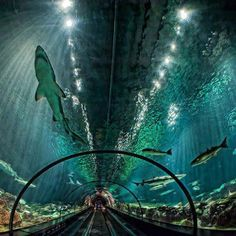 The Glass Tunnel - Shark Exhibit at Sea World, Orlando, Florida