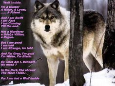Help Maintain Federal Wolf Protections : Take Action! - Care2 News Network