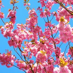 50% OFF - Cherry Blossom Handmade Blank Photography Card Spring Flowers B204 £1.00