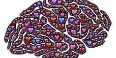 El sentimiento amoroso comienza en una parte del cerebro llamada sistema límbico o cerebro emocional.
