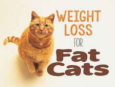 Weight Loss for Fat Cats | eBay