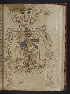 LA SANIDAD PUBLICA NO SE TOCA. NO OSEN  Mansur Anatomy. s.XIV El sistema circulatorio, con la figura dibujada frontalmente. Indicación de algunos órganos internos.