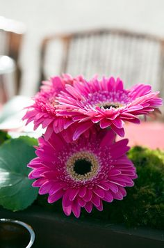 Add a burst of color with bright pink gerbera daisies set on beds of moss.