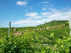 Arte vitivinicola in Valdobbiadene