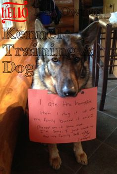 Learn About Kennel Training A Dog With This Article ** Check out this great article.