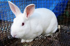 Tell the academy to stop. - Rabbits Apparently Beaten to Death at Air Force Academy
