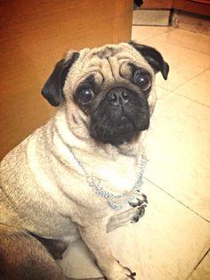 My Pug:)