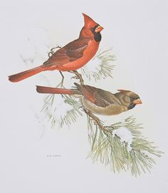 Red birds are epic. Especially at Christmas time.
