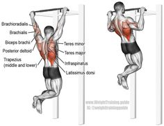 Pullup. A major compound pull exercise! Main muscles worked: Latissimus Dorsi, Brachialis, Brachioradialis, Biceps Brachii, Teres Major, Posterior Deltoid, Infraspinatus, Rhomboids, Teres Minor, Middle and Lower Trapezii, and Levator Scapulae. Visit site to learn why this exercise is better than the lat pulldown. Back Workout Program, Gym Workout Tips, Workout Programs, Biceps Workout, Best Abdominal Exercises, Back Exercises, Belly Exercises, Good Back Workouts, Fitness Bodybuilding