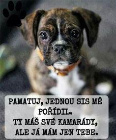 Doberman, Cute Quotes, Pugs, Bff, Haha, Cute Animals, Puppies, Motivation, Petra