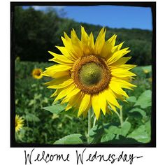 Welcome Wednesday! Do you love sunflowers? Come visit www.awarmhello.com to find a new photo to share with your followers every day!
