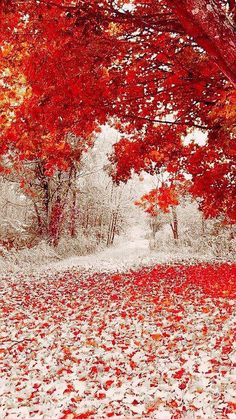 nature makes its own magic .landscape art photography with such beauty it can take your breath away nature as the artist First snowfall in Duluth Minnesota Pretty Pictures, Cool Photos, Amazing Pictures, Snow Pictures, Funny Photos, Beautiful World, Beautiful Places, Beautiful Scenery, Beautiful Nature Pictures