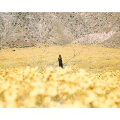 """188 Likes, 3 Comments - dreamweavers collective (@dreamweaverscollective) on Instagram: """"• The desert in bloom. A malleable landscape. Quick to adapt and adopt. Like the temperature of…"""""""