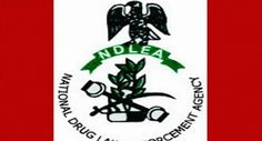 The Kaduna State command of National Drug Law Enforcement Agency (NDLEA), has confiscated 130 bags of cannabis from suspected drug peddlers in the state. While parading the bags of cannabis before …