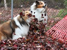 Fall fido fun ! #cute #dog in #nature during the #fall season! #woof!