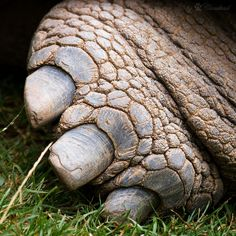 You know you are a turtle freak when you know at first glance this foot belongs to a turtle!