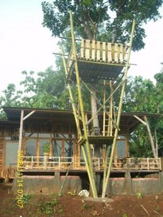 Strictus culms used to build frame work for Greenhouse - Bamboo Arts and Crafts Gallery Bamboo Building, Natural Building, Bamboo Art, Bamboo Crafts, Ideas Cabaña, Bamboo Decking, Bamboo House Design, Kids Backyard Playground, Bamboo Structure
