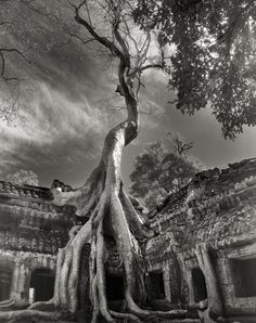 How does one stand in the presence of such strength, wisdom, and beauty??!! Monumental Portraits Of Ancient Trees Reveal Some Of Earth's Oldest Living Wonders
