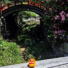 Visiting Shimogamo S