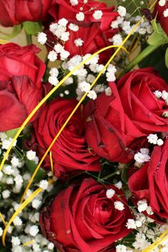 #roserosse #rednaomi #rose #camelia