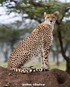 Cheetah via ECSST