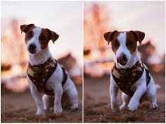 jrt by macrophotos