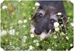 Mcgraw Photography. Pet Photographer. Sweet face!