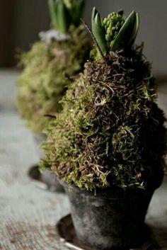 Een hyacinten bol omkleden met een papieren kegel en dat bekleden met plaatmos.