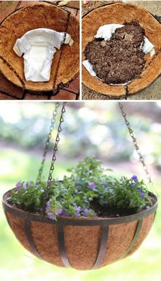 This gardening hack is GENIUS! Use diapers to retain moisture in potted plants. Gardening Hacks and Tips for the Wannabe Gardener. Turn that black thumb into a green thumb with these simple, useful tips. Change the way you garden forever! Garden Web, Garden Design, Container Plants, Container Gardening, Gardening For Beginners, Gardening Tips, Growing Ginger Indoors, Plant Diseases, Hanging Flower Baskets