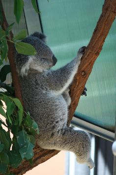 Taronga Zoo Sydney Australia #DownUnder #bestvacation