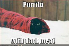 11 Best Burritos Images Burritos Kittens Cutest Crazy Cats