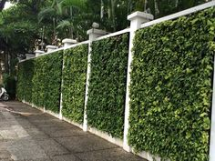 Living green wall @ nassim (ho chi minh city) home fencing, garden fencing, Fence Landscaping, Backyard Fences, Garden Fencing, Backyard Ideas, Pergola Ideas, Vine Fence, Easy Fence, Patio Layout, Green Fence