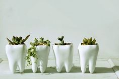 Pots & Planters You Can Buy Right Now Looking for a gift for your favorite dentist? These ceramic tooth planters are sure to get a chuckle.Looking for a gift for your favorite dentist? These ceramic tooth planters are sure to get a chuckle. Dental Hygiene School, Dental Life, Dental Art, Dental Assistant, Dental Hygienist, Dental Health, Oral Health, Dentist Clinic, Dentist Humor