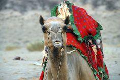 Deserto di Tahar