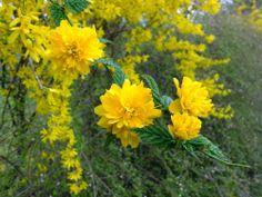Selbstversorger-Garten: Aprilwetter - und Frühlingsbilder