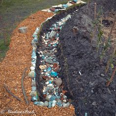 The Water-Purifying Storm Drain . at BiodiverSeed Wood Chip Mulch, Yard Drainage, Erosion Control, Water Management, Rain Garden, Trees And Shrubs, Hydroponics, Drinking Water, Witchcraft