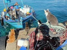 Cats watching a fishing boat return...how sweet!