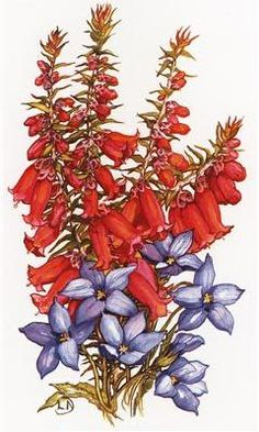 common heath - Google Search Australian Wildflowers, Australian Flowers, Wild Flowers, Embroidery Designs, Google Search, Plants, Bruges Lace, Plant, Wildflowers