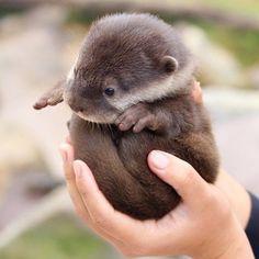 An otter ball