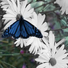 Butterfly Play
