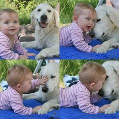 I want to have a dog like this to help welcome my child into the world :)